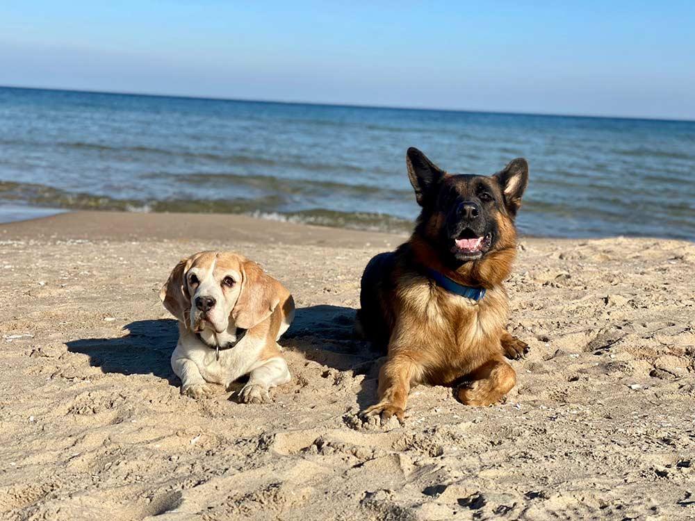 Hundestrand auf Usedom